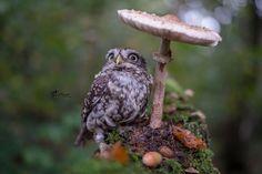 owl-and-mushrooms-tanja-brandt-7