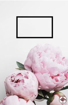 59 Ideas For Flowers Peonies Wallpaper Inspiration Pink Wallpaper Light, Pink Wallpaper Quotes, Pink Glitter Wallpaper, Pink Wallpaper Girly, Pink Wallpaper Backgrounds, Plant Wallpaper, Pink Wallpaper Iphone, Flower Backgrounds, Flower Wallpaper