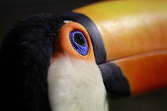 Tucan Bird by MrBlueSky1987.deviantart.com