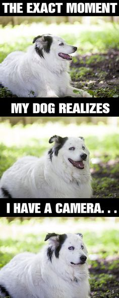 since this is already all over the web, thought I'd upload it to my photography board....my dog Gus.  He hates the camera and either gives me this look or won't look directly at me.  :-/  camera dog, funny dog, dog meme