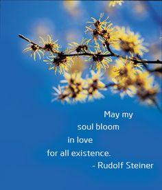 """May my soul bloom in love for all existence."" - Rudolf Steiner"