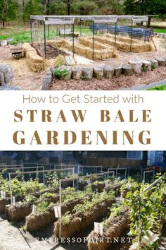 A simple getting started guide for growing veggies and flowers on straw bales. #strawbalegardening #vegetablegardening #empressofdirt