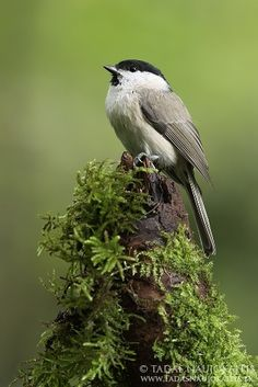 Bird Photography Near Feeders from Digital Photography School