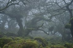 Haunted forests of Dartmoor National Park in Devon, England (by Duncan George). Dartmoor National Park, Haunted Forest, Devon England, Mists, Forests, Roads, National Parks, Dawn, Road Routes