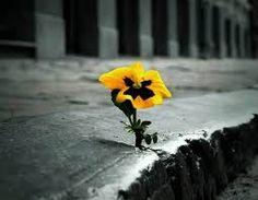 """""""Mi piace quando un fiore o un piccolo ciuffo di erba crescono attraverso una fessura nel cemento. E' così dannatamente eroico."""" George Carlin  #cit #aforisma #quotes #citazione #flower"""