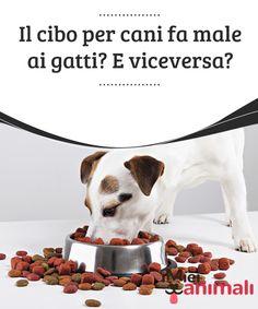 33 Immagini Incredibili Di Cibo Per Cani Royal Canin Dog Food Dog