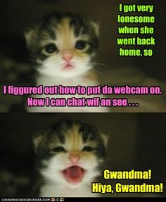 Page 3 of 716 - LOLcats is the best place to find and submit funny cat memes and other silly cat materials to share with the world. We find the funny cats that make you LOL so that you don't have to. Funny Animal Jokes, Funny Cute Cats, Silly Cats, Funny Cat Memes, Funny Cat Videos, Cute Cats And Kittens, Cute Funny Animals, Funny Animal Pictures, Cute Baby Animals