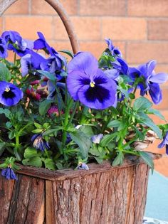 most beautiful small flowers Unusual Flowers, Most Beautiful Flowers, Types Of Flowers, Small Flowers, Pretty Flowers, Anemone Flower, My Flower, Small Flowering Plants, Window Box Flowers