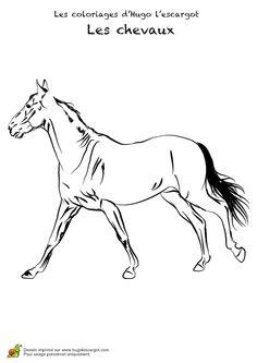 Un cheval beau et robuste à colorier