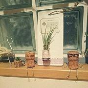 On Walls,グリーン,多肉植物,コルクリメイク,転写シール,ワインコルクに多肉植物に関連する他の写真