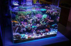 Home Aquarium, Reef Aquarium, Saltwater Aquarium, Nano Reef Tank, Reef Tanks, Types Of Blue, Cleaning Crew, Fish Feed