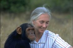 Jane Goodall is best known for her study of chimpanzee social and family life. She began studying the Kasakela chimpanzee community in Gombe Stream National Park, Tanzania in 1960