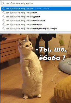 Русские (русскоязычные) смешные мемы. Мемасы ржач приколы 18+ ЧТБ Мемы на русском ты шо ёбобо