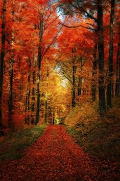 Philippe Sainte-Laudy Forest Garden Canvas Art - 20 x 25 Foto Nature, All Nature, Nature Images, Forest Path, Forest Garden, Autumn Forest, Autumn Park, Beautiful World, Beautiful Places