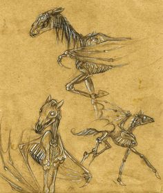 Like the bottom left one if done more closely to the how the thestrals are in the movie. I'd want it to go with the deathly hallow animation tattoo on the opposite forearm. Thestral Tattoo, Hogwarts, Youtube Drawing, Harry Potter Tattoos, My Fantasy World, Muse Art, Harry Potter Fan Art, Magical Creatures, Magazine Art