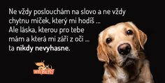 Dog Quotes, Qoutes, Dachshund, English Words, True Words, Dear Friend, Dream Life, Motto, Animals And Pets