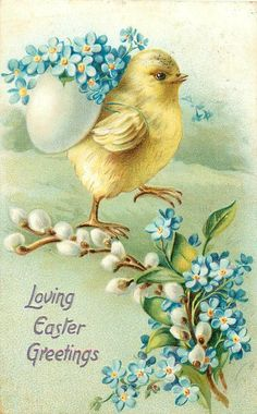 LOVING EASTER GREETINGS  chick carries egg-shell of forget-me-nots on back, pussy willow & forgrt-me-nots below right