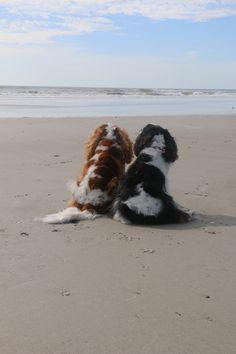 Charlie Brown and Sam enjoying the beach