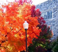 VT campus in the fall