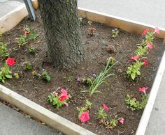 Guerrilla Gardening can open up more possibilities for herb gardening, even if you don't have a lot of space!