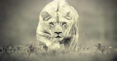 Každý človek má v sebe nejaké duchovné zviera. Zistite, ktoré zviera charakterizuje vás v tejto etape života a čo o vás vypovedá.