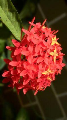 Flower ...... 123