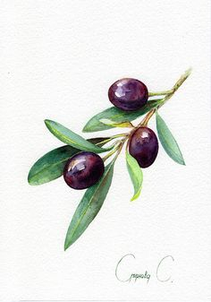 Olive berries yellow blue green Watercolor Original Painting from the Artist Art and Collectibles Drawing botanical Illustration Art Artist berries Blue botanical Collectibles Drawing Green Illustration olive Original Painting Watercolor yellow # Watercolor Fruit, Watercolor Flowers, Watercolor Paintings, Painting Flowers, Watercolour, Simple Watercolor, Watercolor Artists, Watercolor Portraits, Illustration Blume