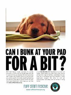 dog adoption flyer template - pet adoption flyer template and animal shelter on pinterest