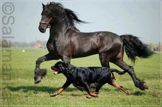 Love it Rottweilers and horses are my favorite: .jpg (800×531)