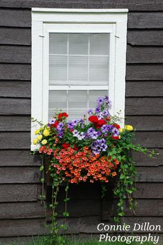 Window Box - Flowers - Home Decor - Summer - Colorful - Fine Art Photography…