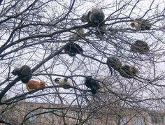 Árvore de Gatos
