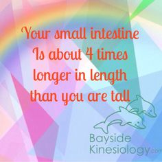 Your small intestine is about 4 x's longer in length than you are tall