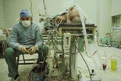 Cirurgião cardiovascular após um transplante de coração bem sucedido e que durou 23 horas. Seu assistente dorme no canto da imagem  Leia mais: http://www.tudointeressante.com.br/2013/11/as-43-fotos-mais-emocionantes-ja-tiradas-ate-hoje.html#ixzz39CIi7Mdq