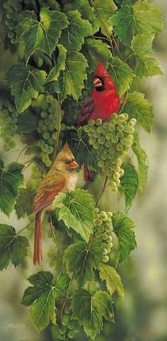 I would love to paint these Cardinals in watercolors.