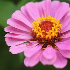 Flower photography nature photography macro