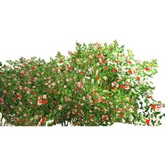 Flower-Bush.png~original.png ❤ liked on Polyvore featuring flowers
