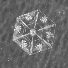 (1) Real Snowflake Photography by Karla Jean Booth