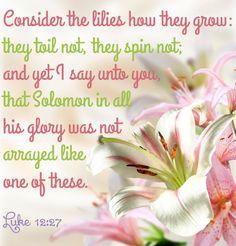 Luke 12:27 KJV