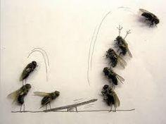 """Quan diuen... """"Qui mata una mosca a l'abril, en mata cent mil"""". Deuen voler dir... """"Fer el que toca quan toca  (...i ara toca!!!!)"""""""