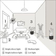 Lighting guide for houseplants Indoor Garden, Garden Plants, Indoor Plants, Belle Plante, Pot Jardin, Low Light Plants, Plant Lighting, Types Of Lighting, Modern Lighting