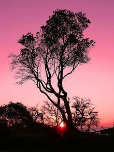 Australian sunset - ©Neil O'Connor