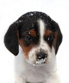 i love a beagle baby