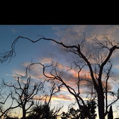 Lovely sunset with a Tim Burton-esque touch