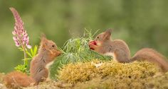 love for buds, автор — Geert Weggen на 500px.com