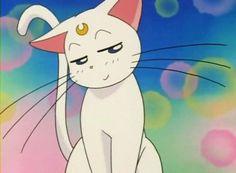 here kitty kitty. Sailor Moon Meme, Sailor Moon Screencaps, Sailor Moon Luna, Sailor Moon Stars, Sailor Moon Crystal, Sailor Venus, Sailor Moon Aesthetic, Aesthetic Anime, Got Anime