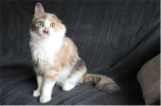 The Cat Made A Full Recovery Growing In Lots Of Fur | This Abandoned Cat Was Left For Dead Until It Was Rescued