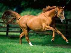 Image detail for -Horses. Horse Breeds. | Celhoz.com - funny site about all