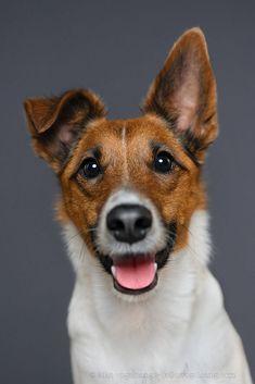 Dog Photos, Dog Pictures, Animal Pictures, Akita Dog, Dog Logo, Mundo Animal, German Shepherd Dogs, Happy Dogs, Animal Photography