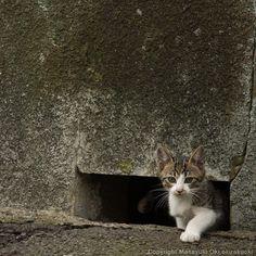 Hello #cat #ねこ