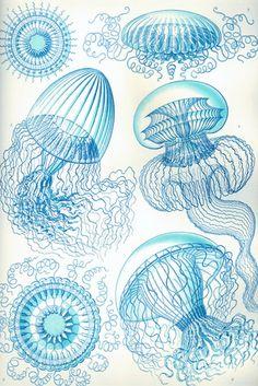 Medusas, por Ernst Haeckel                                                                                                                                                      Más